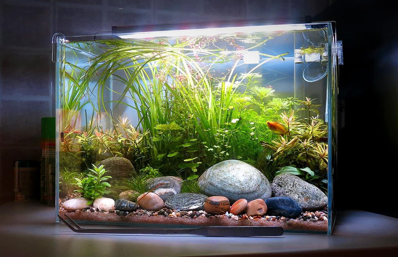 River aquarium