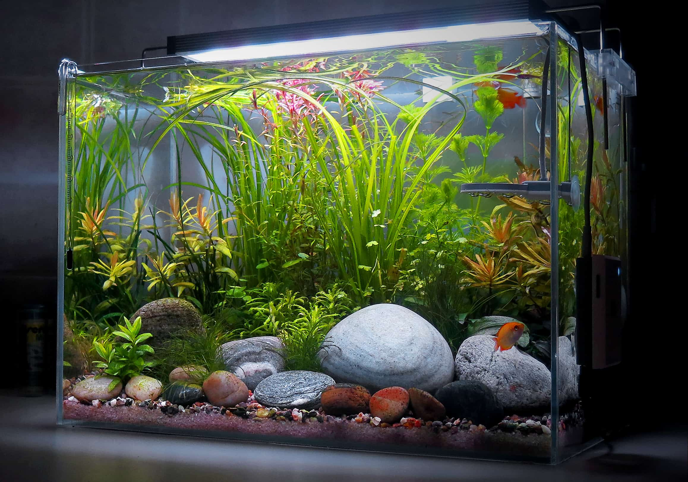Natural Aquarium In Style Aquascape Aquarium In The House