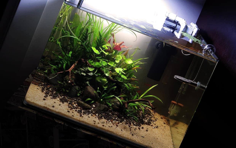 Acquario biotopo acquascape