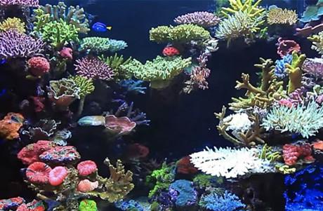 Progettazione acquario marino