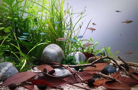 Progettazione acquario naturale