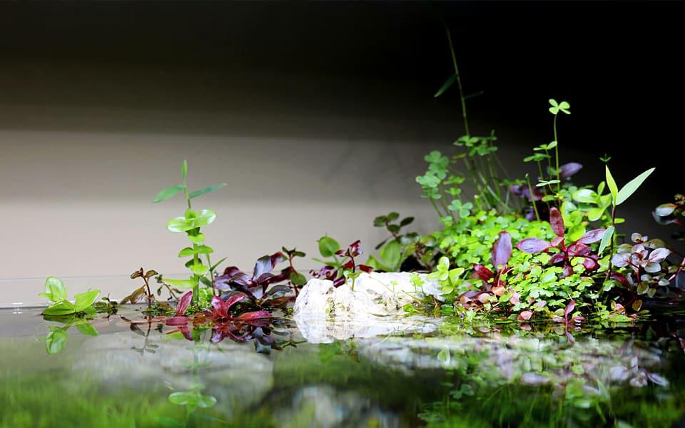Acquario shallow