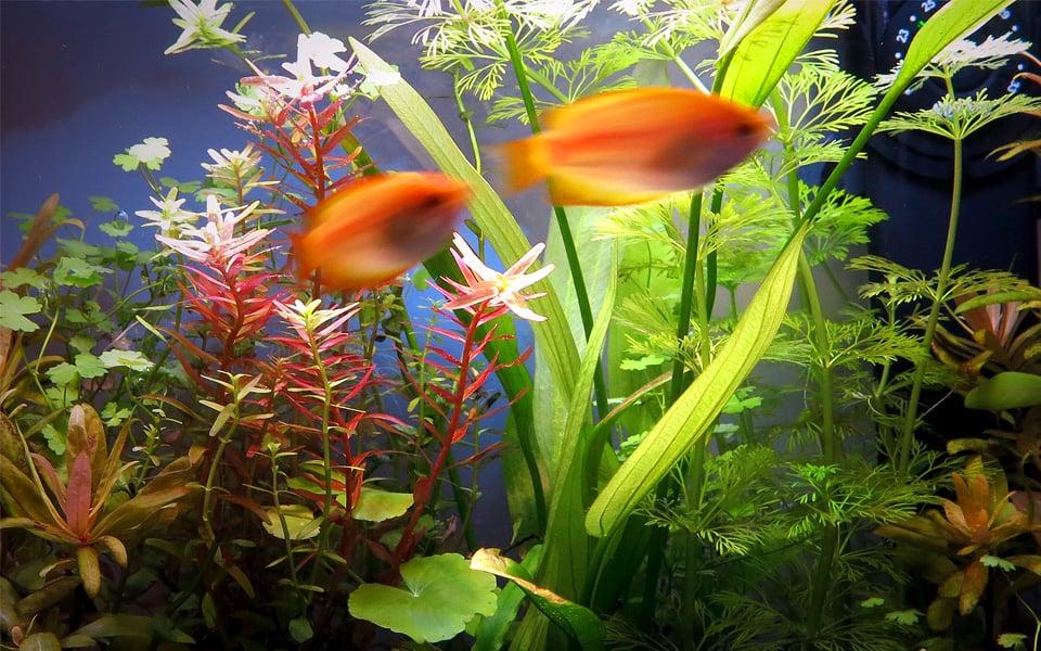 Hobby acquario Marcello Moresco