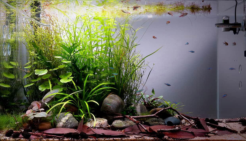 Hobby acquario