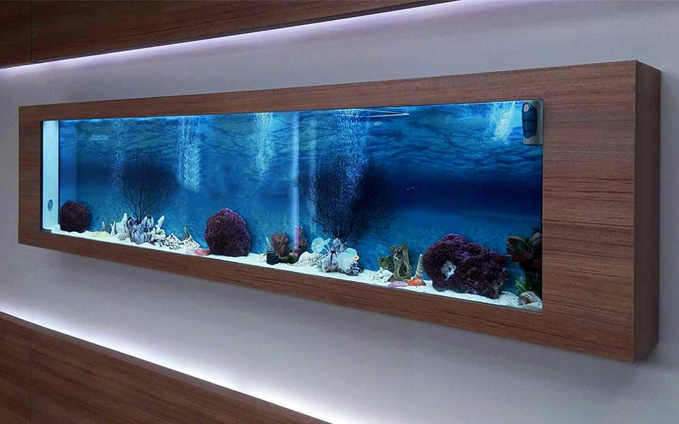 Miglior acquario in casa